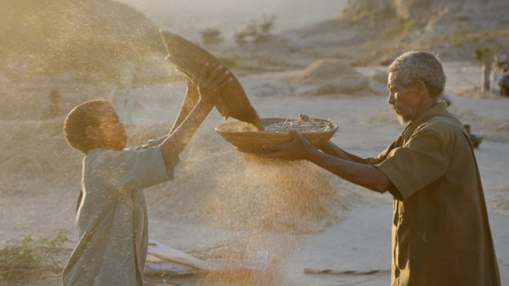 A father and son winnow teff in Tigray, Ethiopia.Credit Getty Images